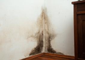 2.1 Εμφάνιση μούχλας και μαύρων στιγμάτων σε εσωτερική τοιχοποιία - Κεντρική Εικόνα