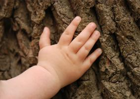 Τι ισχύει για τα προϊόντα προστασίας και φροντίδας ξύλου βάσης νερού; Ποια είναι καλύτερα; Τα προϊόντα βάσης νερού ή αυτά βάσης διαλύτη; - Κεντρική Εικόνα